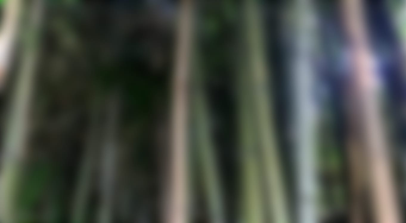 Detail view of Bamboo tree